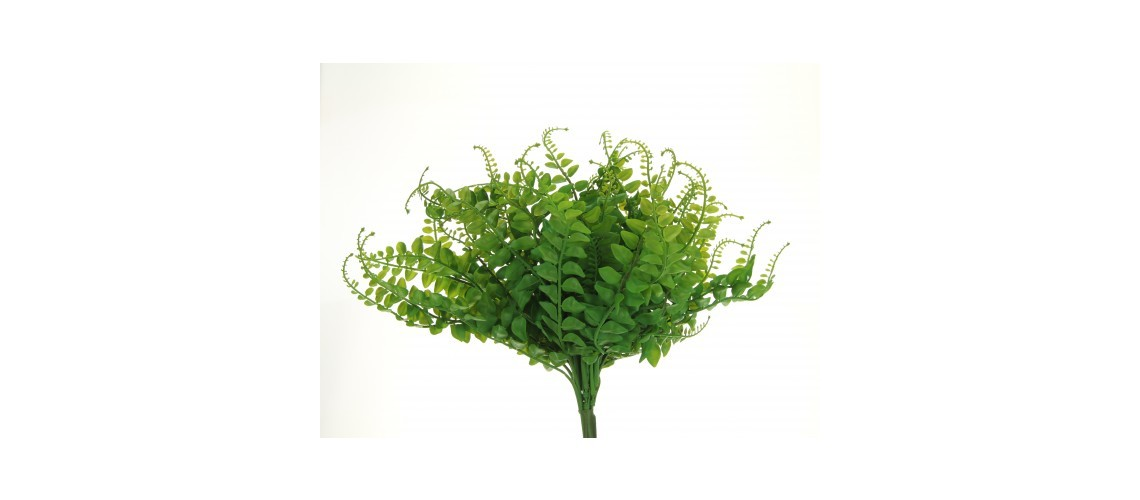 Fern Bush Green
