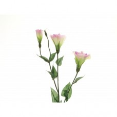 Eustoma Mauve Grandi Florum